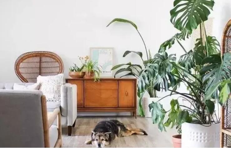 室内绿植挑选与摆放技巧!